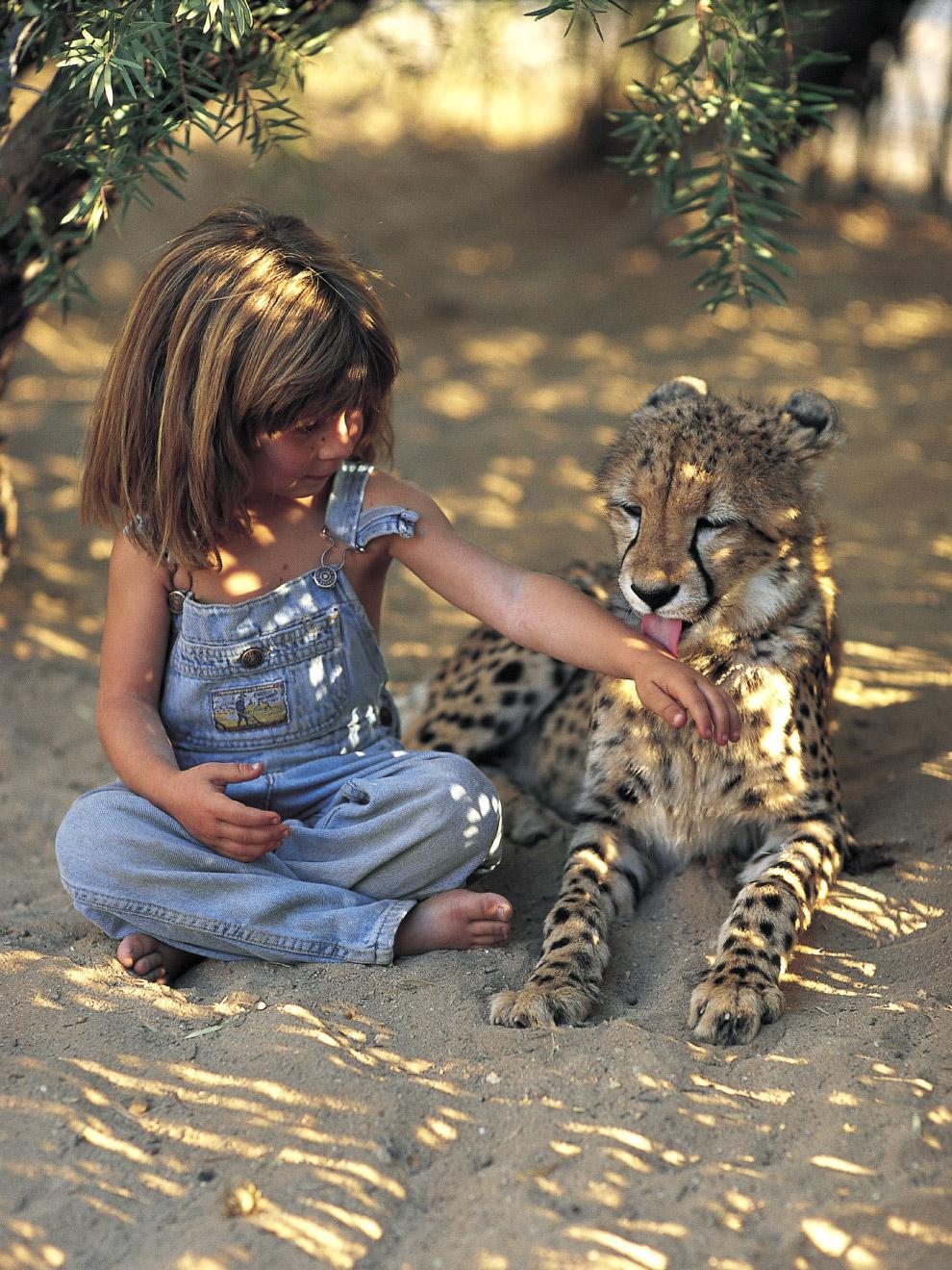 Типпи в возрасте 6 лет и маленький гепард, Намибия