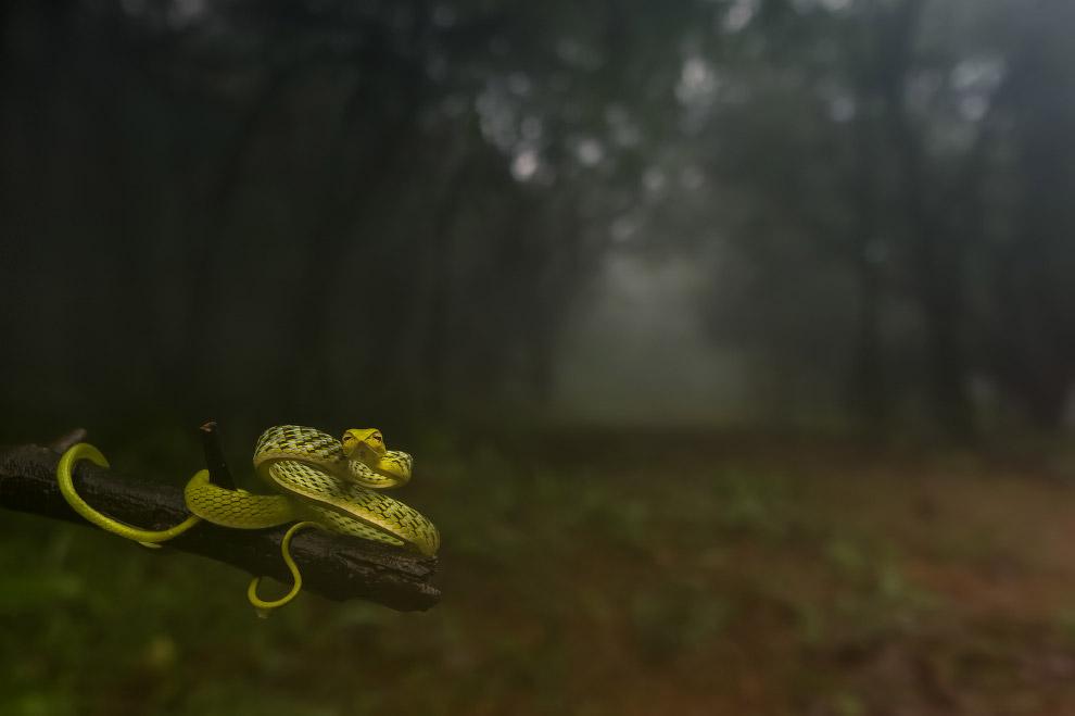 Змея в лесу в Индии