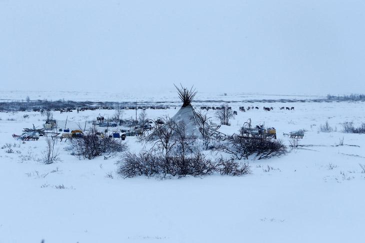 Оленеводы в тундре в Ненецком автономном округе