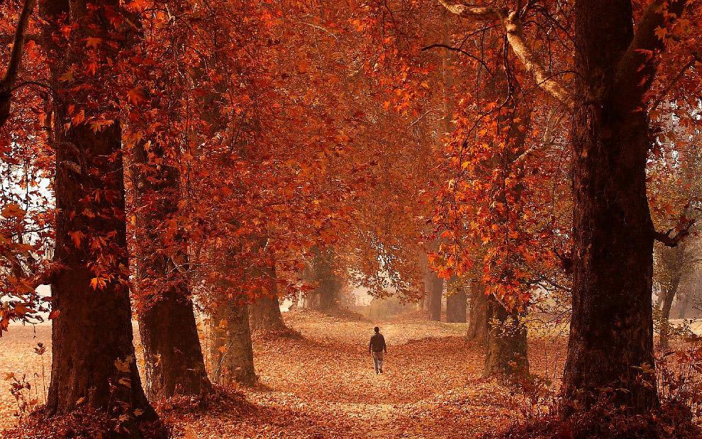 Осень в Сринагаре, Индия