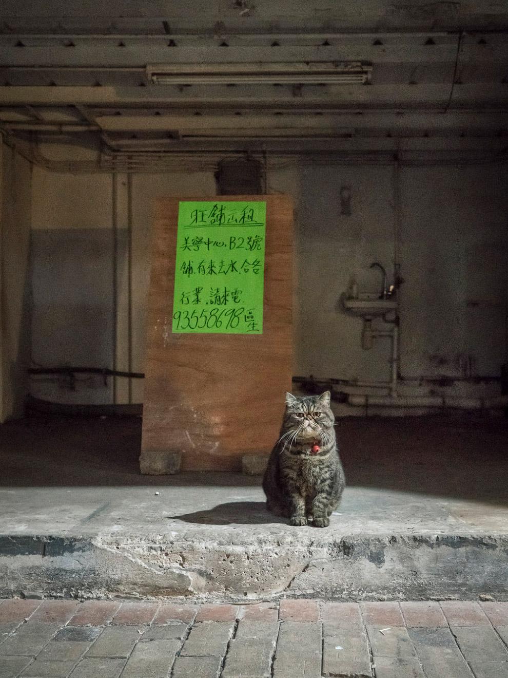 Тайная жизнь домашних животных в магазинах Гонконга