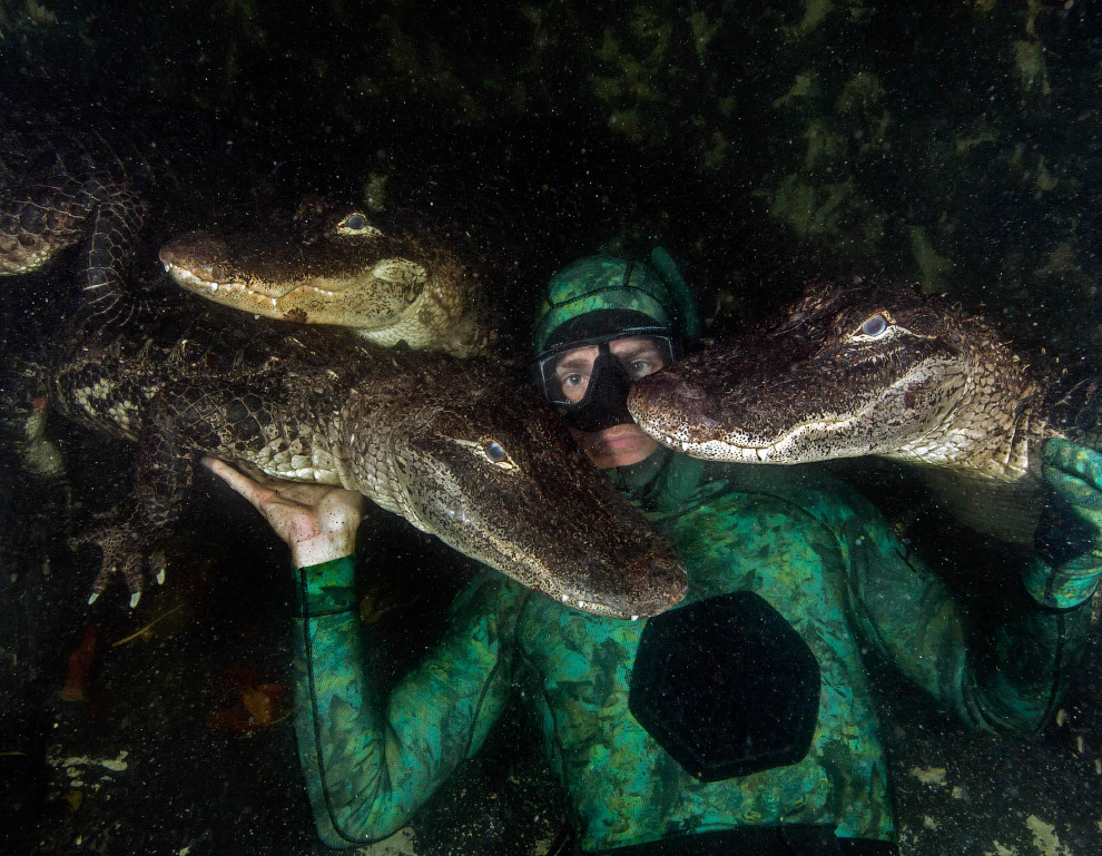 Селфи  с аллигаторами