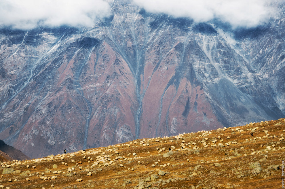 Барашки на фоне горы Куру (3302 м)