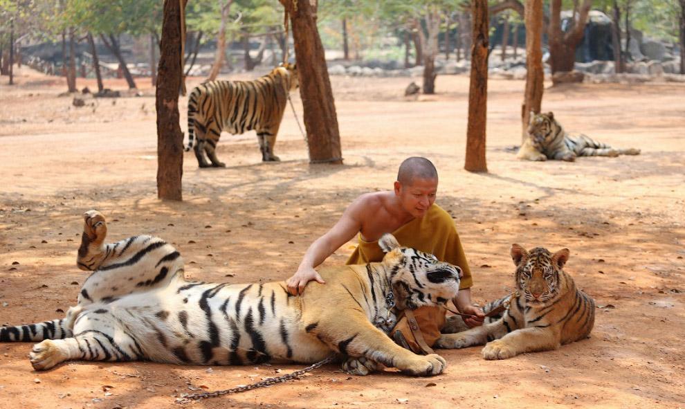 №6. Тигриный монастырь, Тайланд