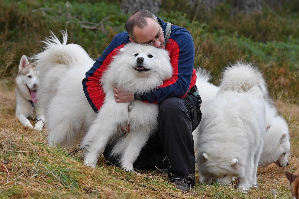 Самоедская собака — в просторечии — самоед