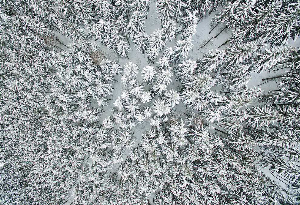Зимний лес в районе гор Гарц, Германия