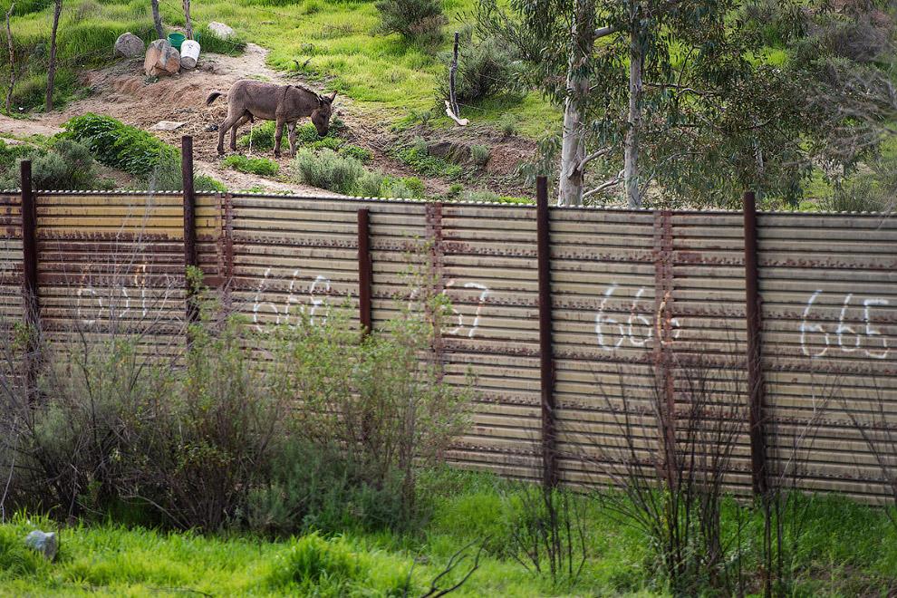 Стена на границе с Мексикой и мексиканский ослик