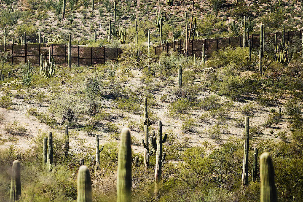 Стена на границе с Мексикой и кактусы