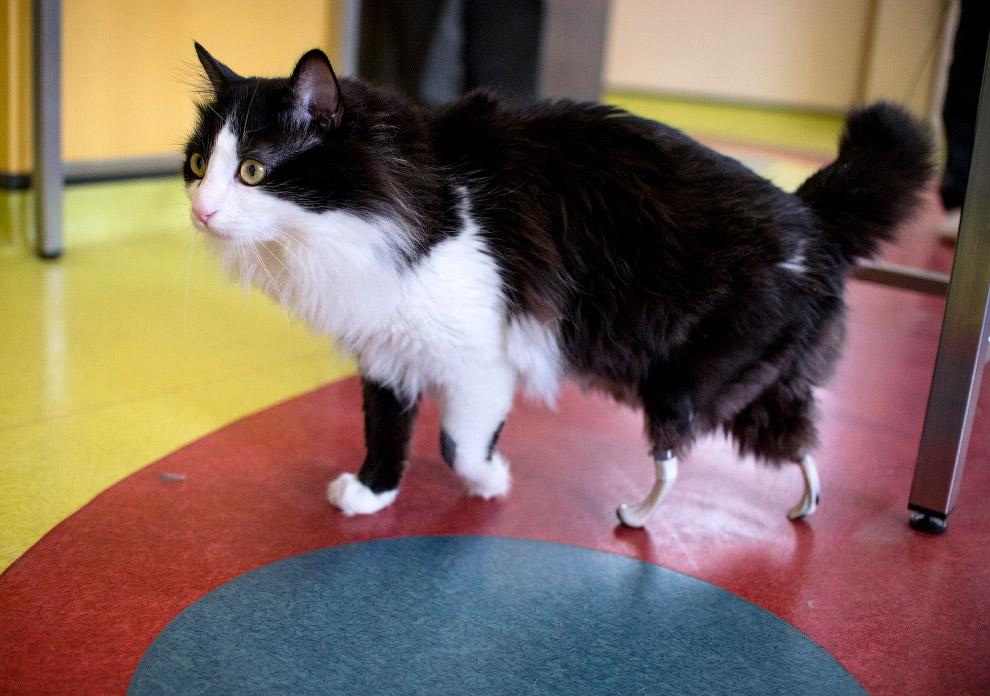 Бионический кот из Софии