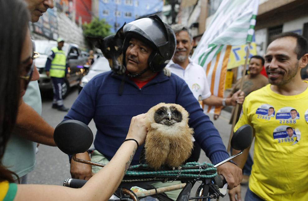 Любимый питомец. Любит кататься на мотоцикле