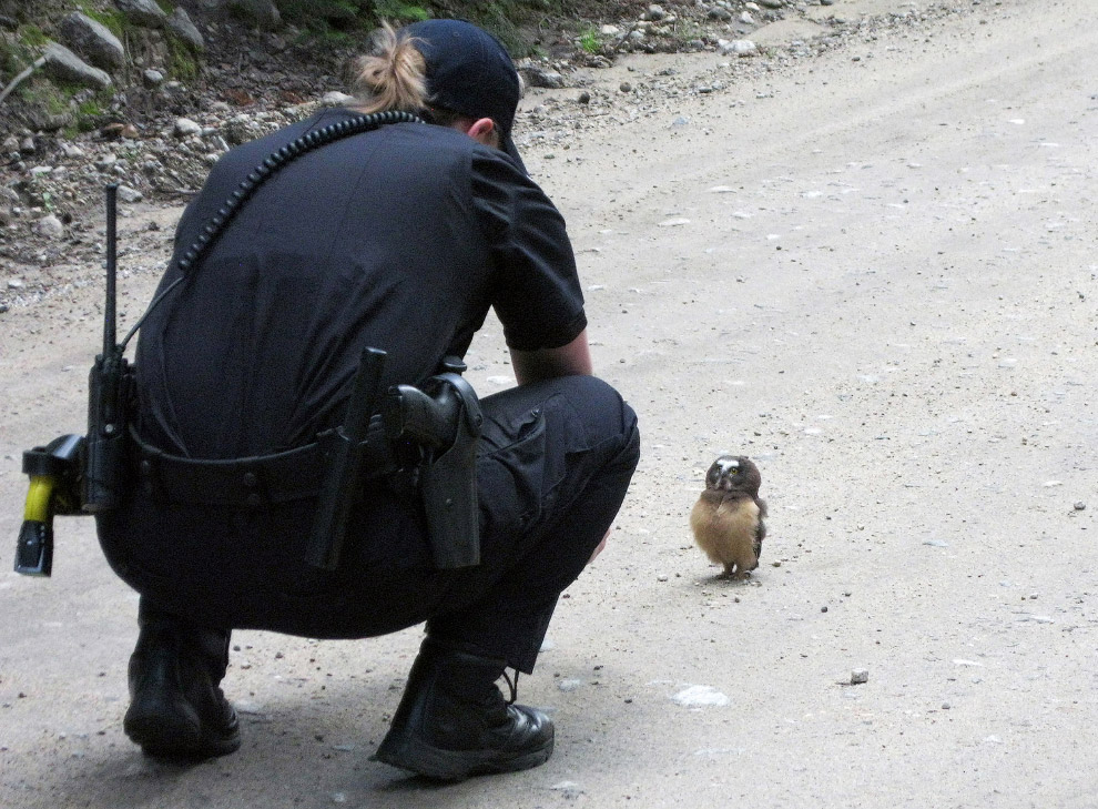 Совсем маленькая сова