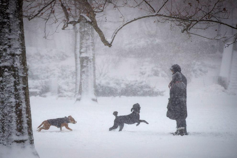Нью-Йоркским собакам нравится