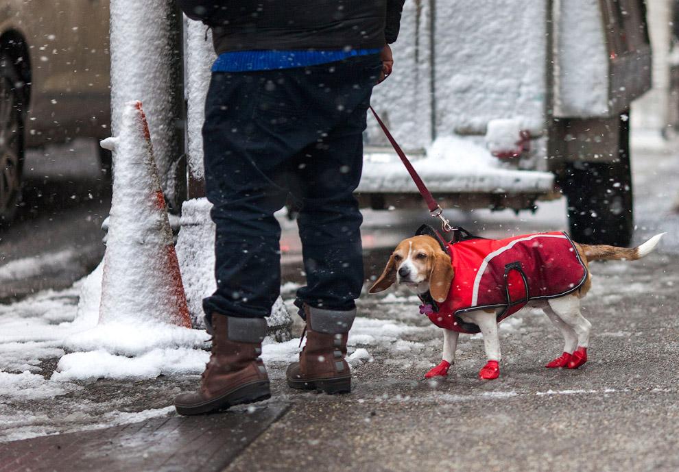 Филадельфия в снегу, штат Пенсильвания