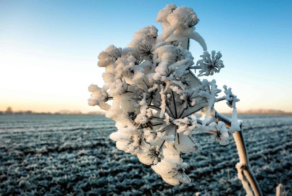 Снежные поля ждут весны и посевной