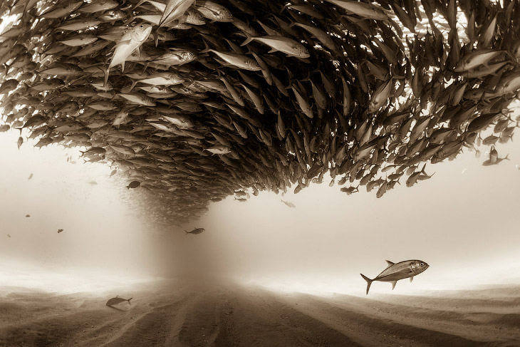 Конкурс фотографий Sony World Photography Awards 2016