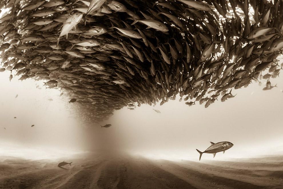 Косяк рыбы