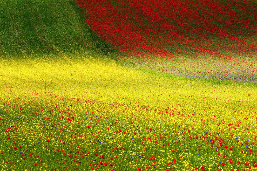 Цветущие поля в национальном парке Монти-Сибиллини, Италия