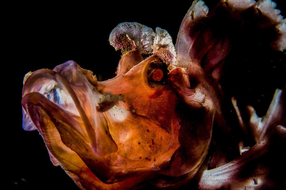 Морская лучепёрая рыба