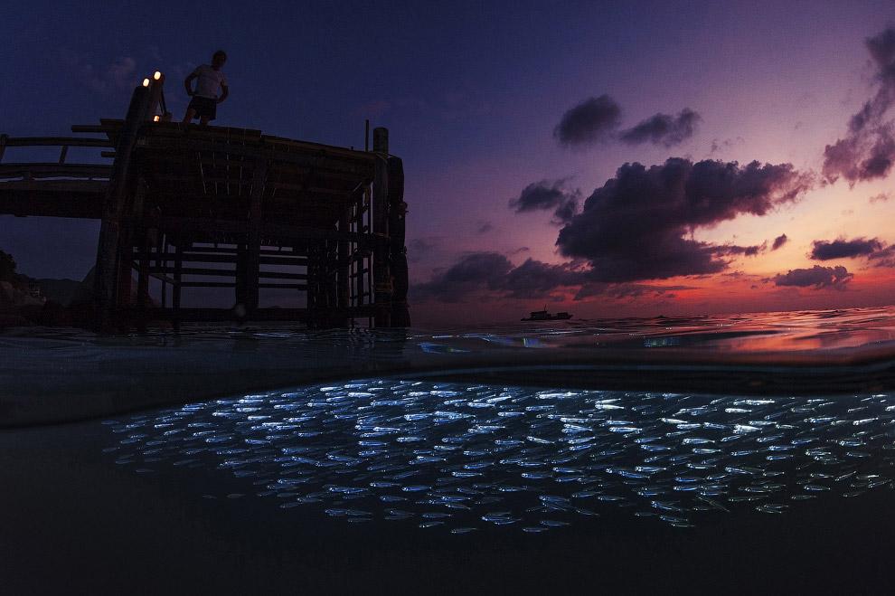 Косяк рыбы в Таиланде