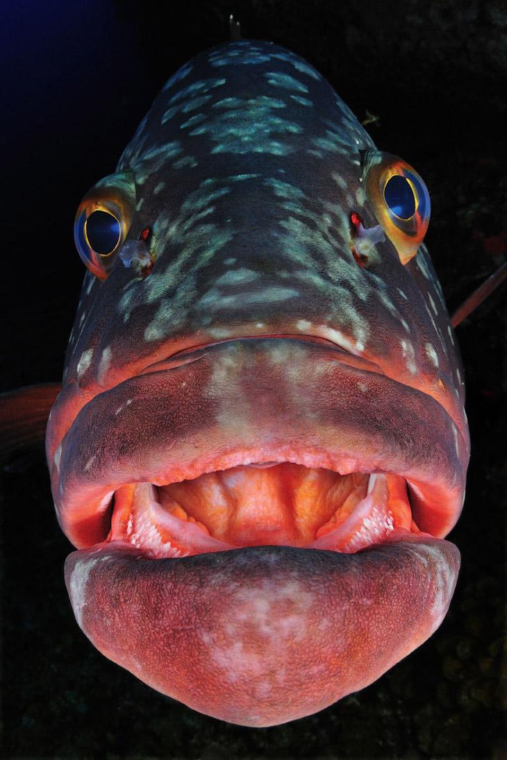 Глубоководная рыба