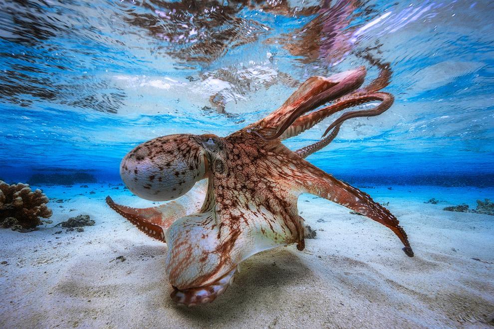 Танцующий осьминог