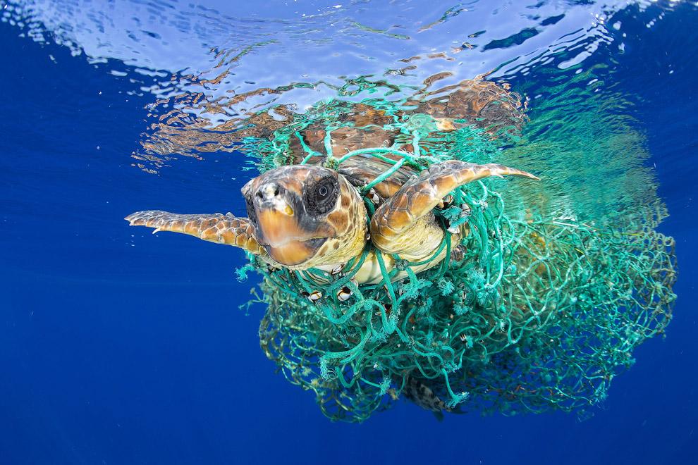 Морская черепаха запуталась в сетях у берегов Тенерифе, Канарские острова