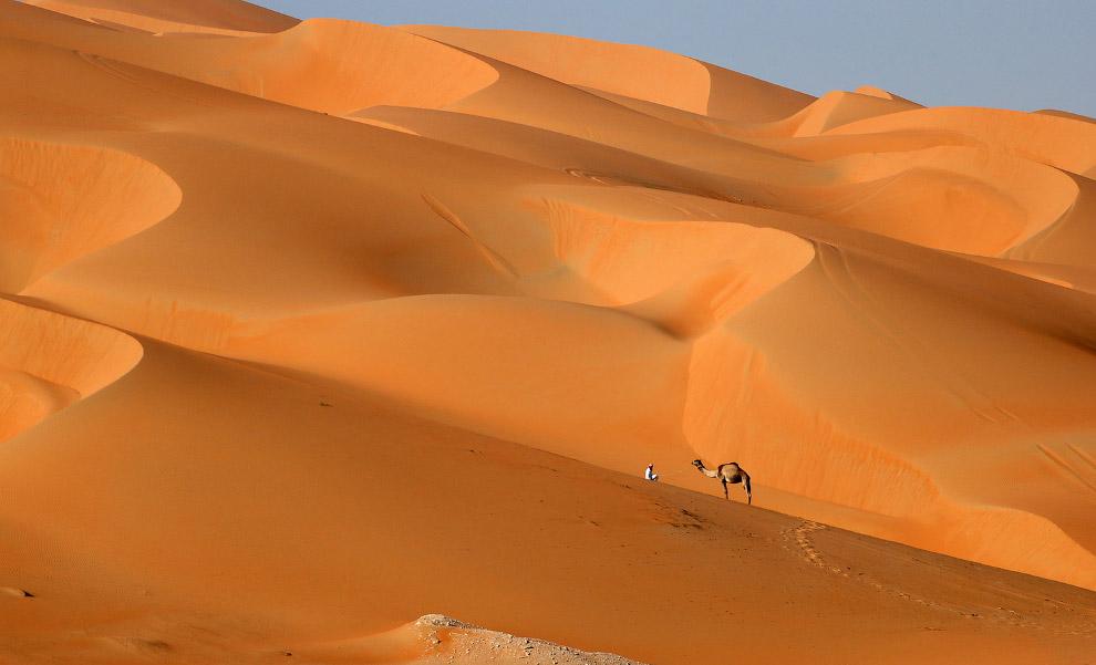 Хозяин и его верблюд в пустыне Лива в эмирате Абу-Даби