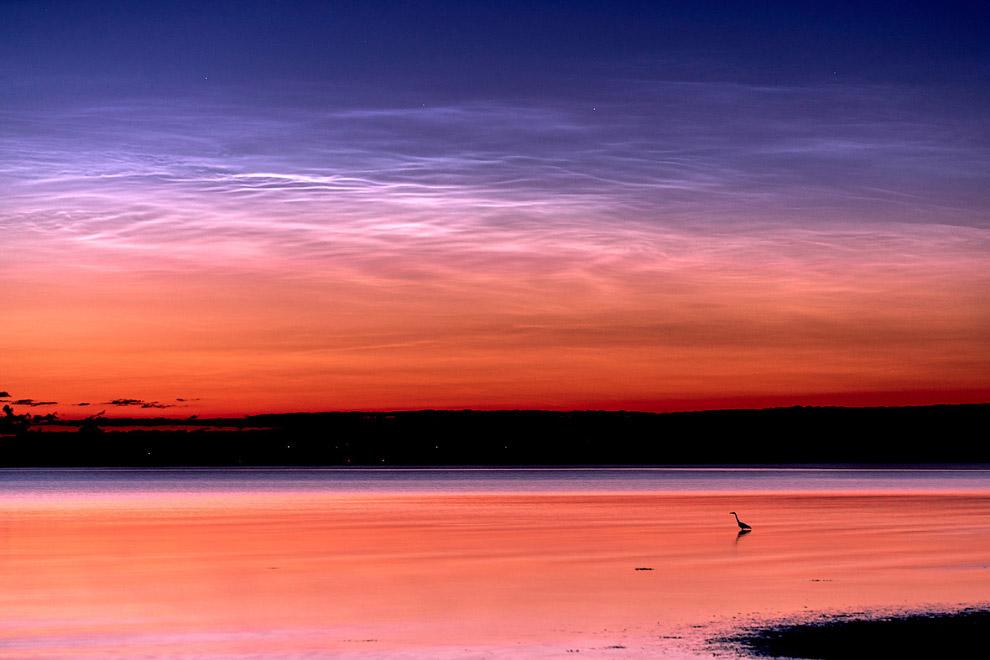 Одинокая цапля и закат в Дании
