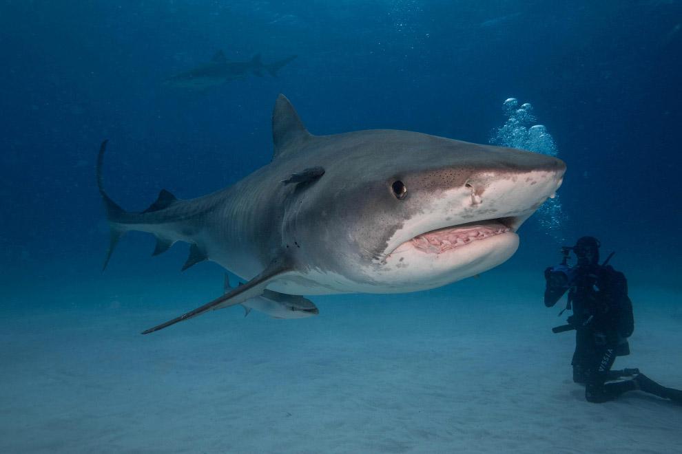 Подводная встреча с акулой