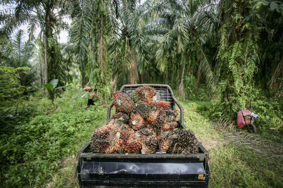 palm oil stalemate The palm oil prices recorded over the last ten weeks are listed in the table: first and second columns show crude palm oil (cpo) cif rotterdam prices in usd/ton and their conversion in €/ton.