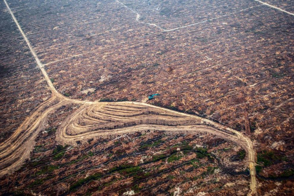 Лес сожжен, земли готовы под новые пальмовые посадки.
