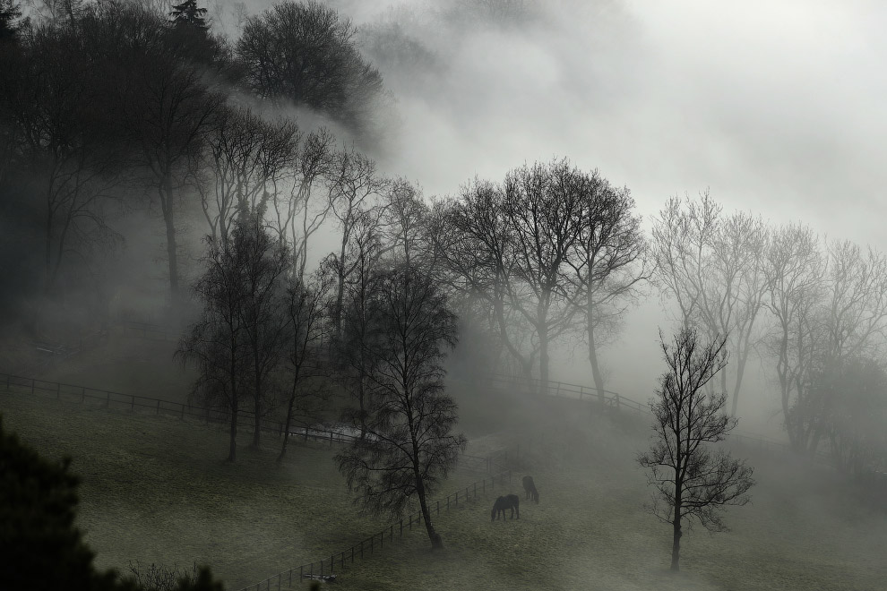 Лошади и сильный туман в графстве Суррей на юго-западе Лондон
