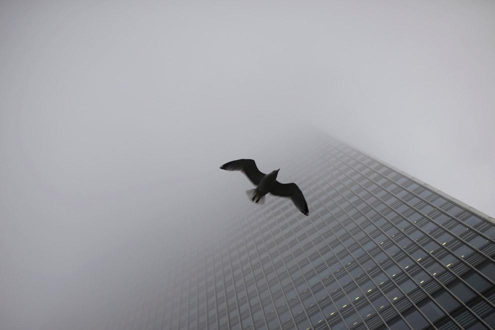 Чайка и сильный туман в Лондоне, Великобритания