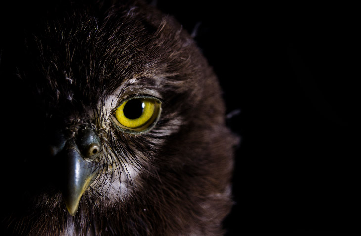 Лучшие фотографии с конкурса World Wildlife Day