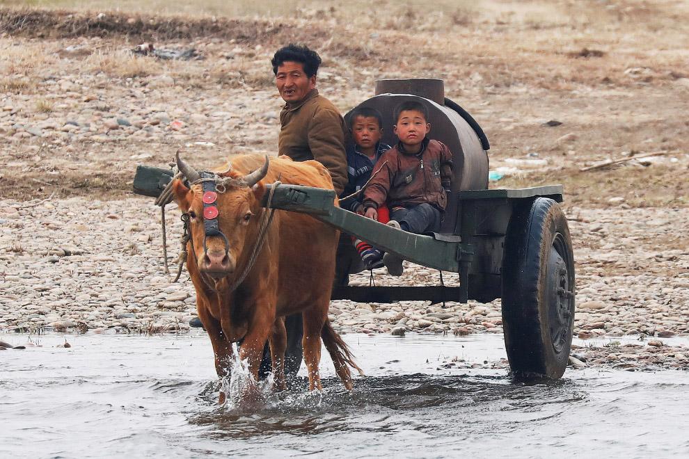 Северокорейский фермер едет вдоль границы