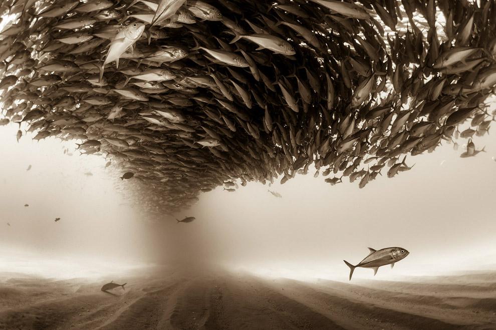 Величезний косяк риби і 3-е місце в категорії «Природа»