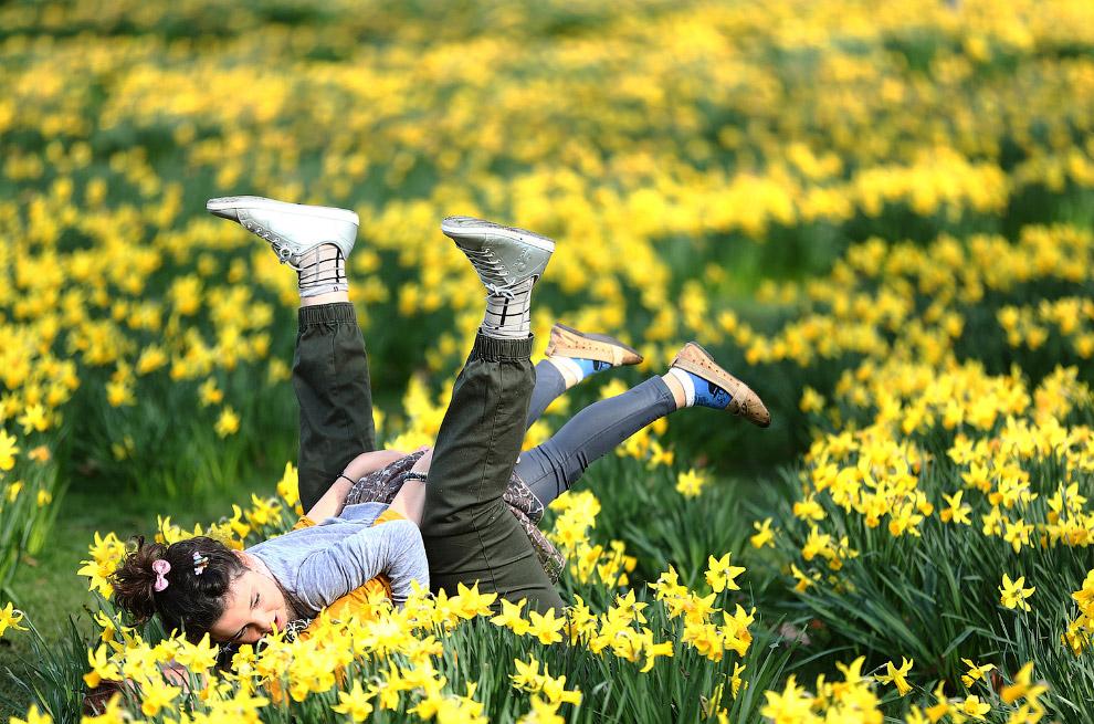 Нарциссы в паркев Лондоне, Англия