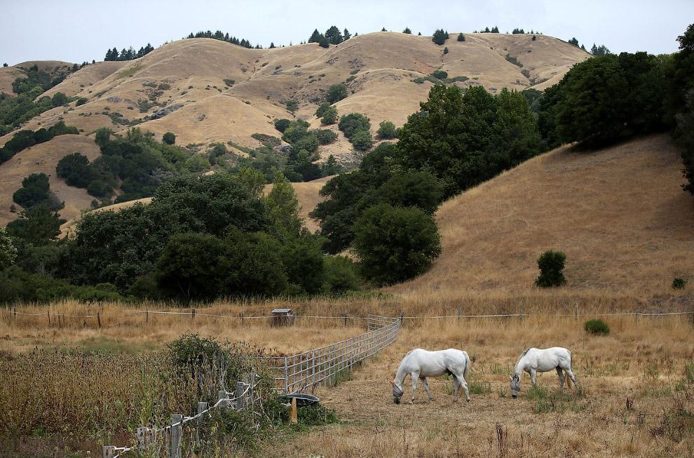 Лошади и мертвая трава