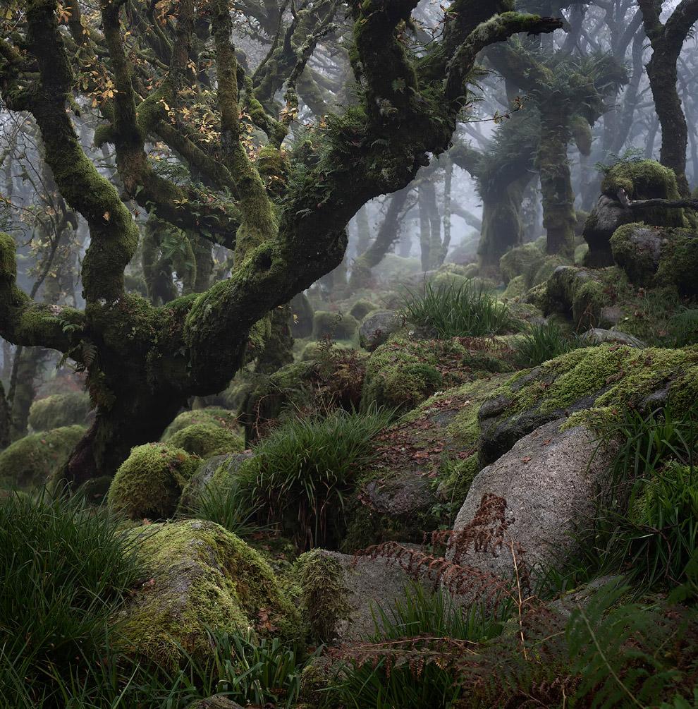 Сказочный лес в Дартмуре в графстве Девон в Юго-Западной Англии