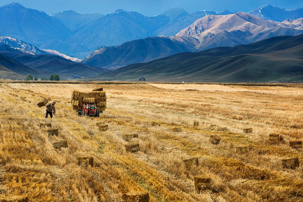 Уборка урожая на фоне гор