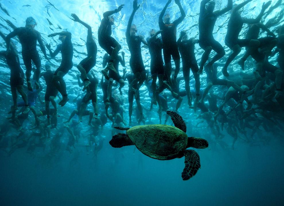 Зеленая морская черепаха на Гавайях
