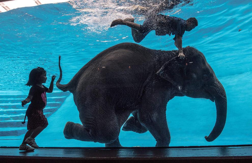 Подводная прогулка слона в зоопарке Бангкока, Таиланд