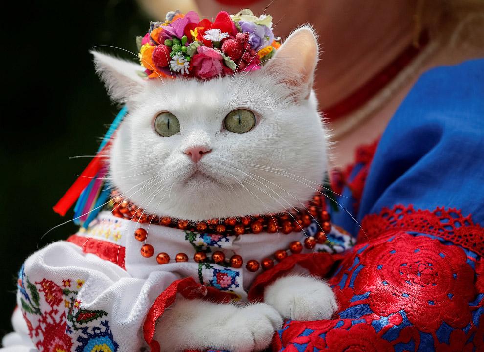 Фестиваль в центре Киева, Украина
