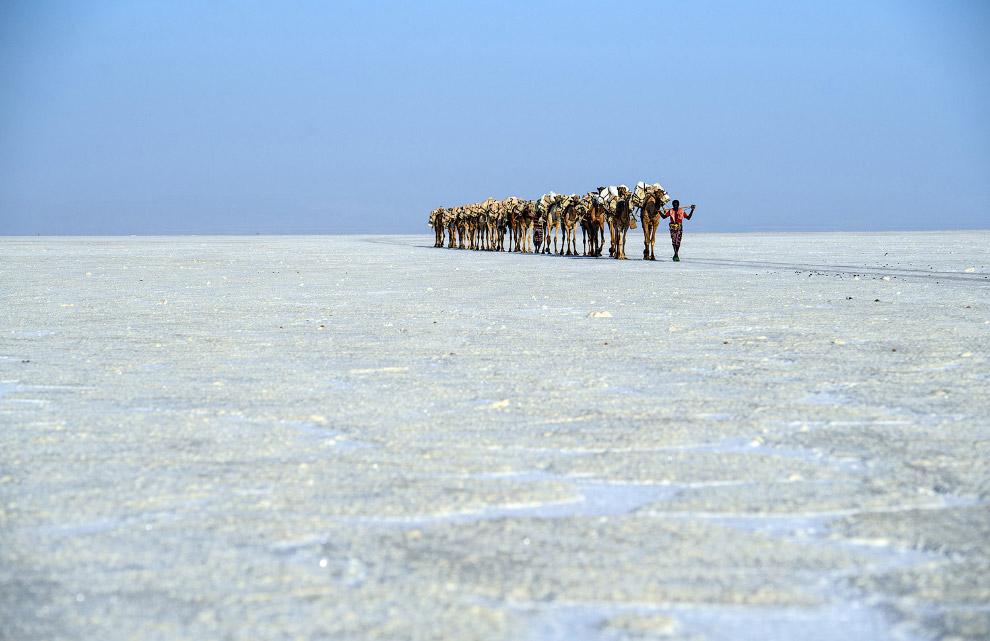 Видобуток солі в Данакільской низовини і верблюжий караван