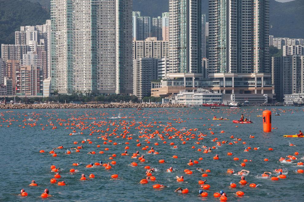 Ежегодный заплыв в гавани в Гонконге