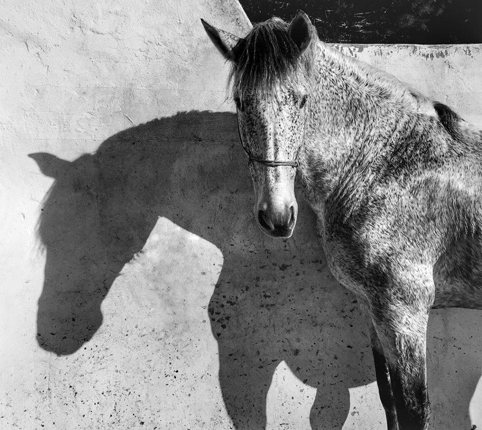 Лошадь в Андалусии, Испания