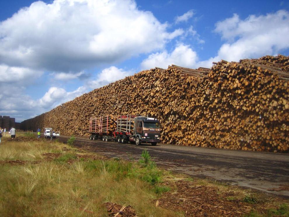 Гигантские залежи древесины в Швеции
