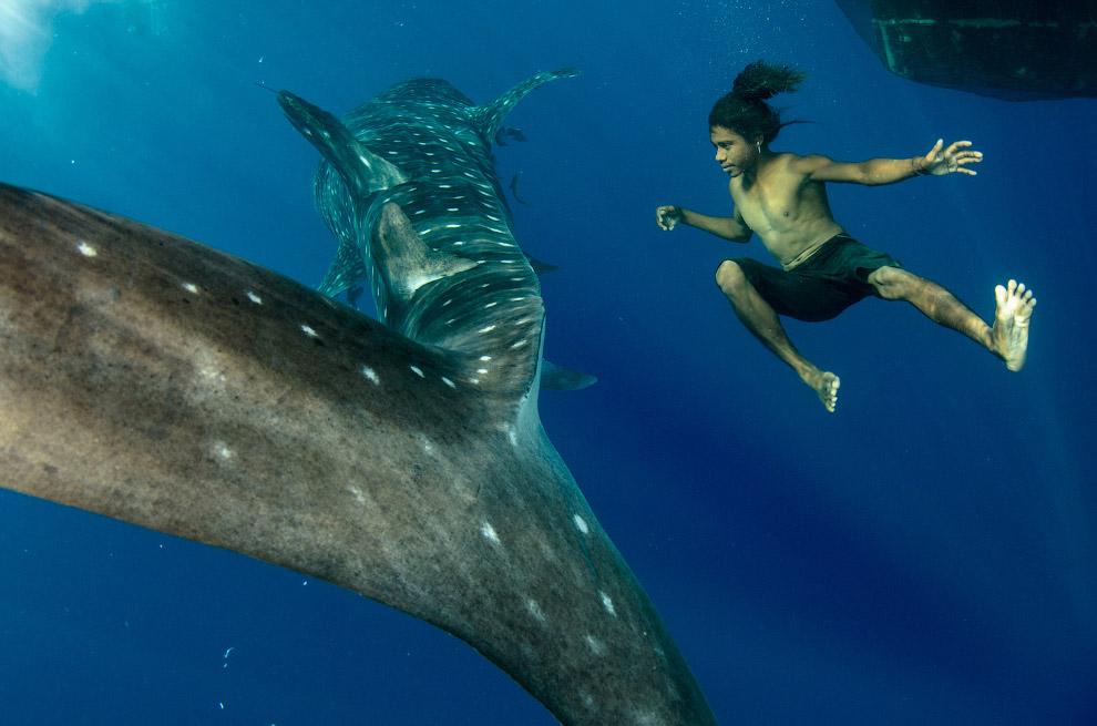 Заплыв с китовой акулой