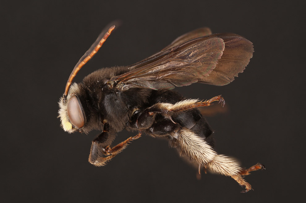 Макроснимки пчёл