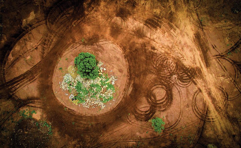Деревья и следы шин на земле, Южная Африка